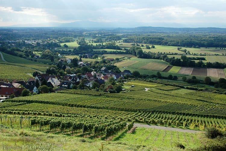 Ferienwohnung Im Rheintal (403950), Freiburg, Schwarzwald, Baden-Württemberg, Deutschland, Bild 32
