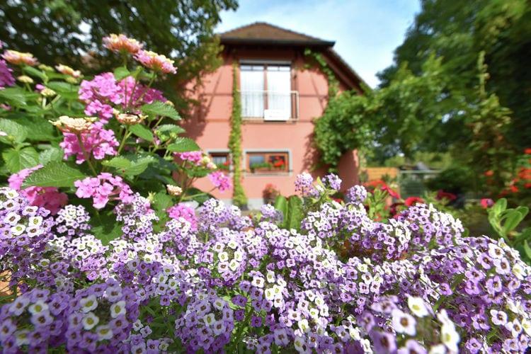 Ferienwohnung Im Rheintal (403950), Freiburg, Schwarzwald, Baden-Württemberg, Deutschland, Bild 35