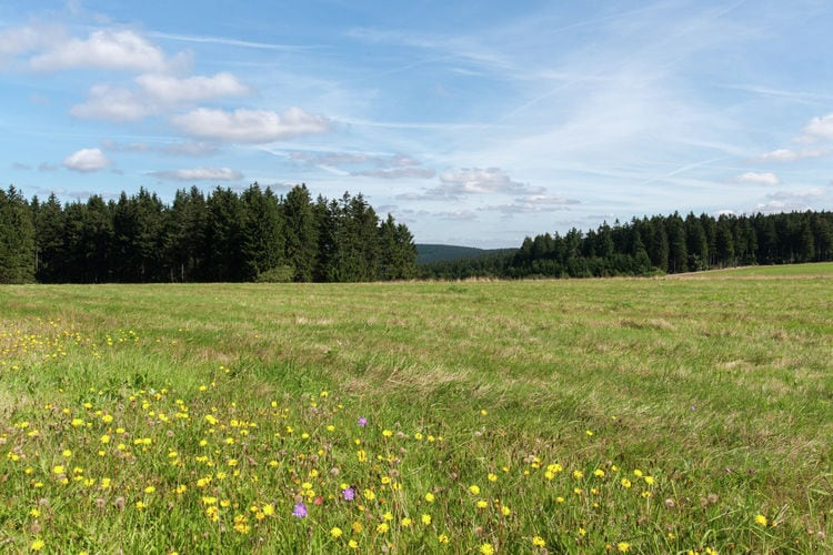 Holiday house Am Wald (405945), Neustadt, Thuringian Forest, Thuringia, Germany, picture 35