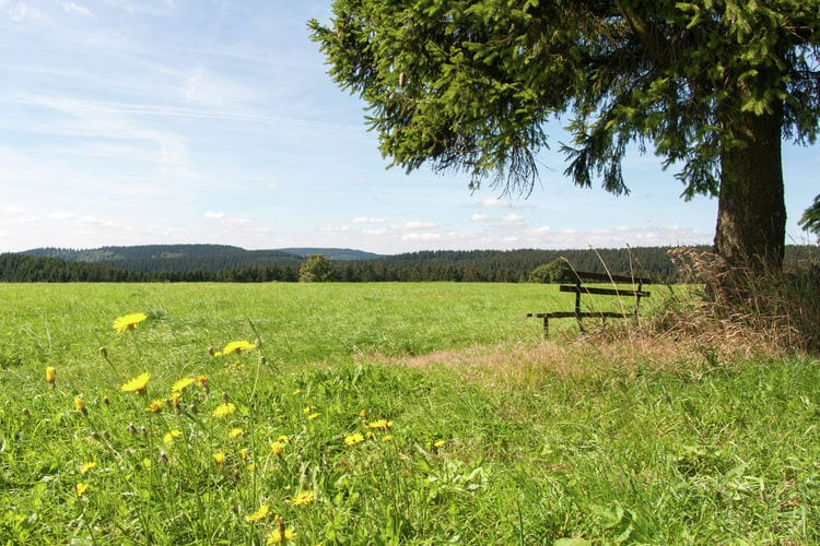Holiday house Am Wald (405945), Neustadt, Thuringian Forest, Thuringia, Germany, picture 37