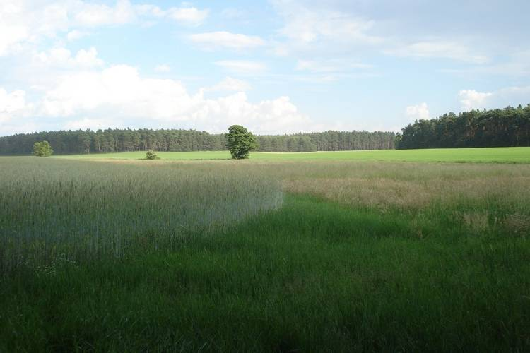 Ferienwohnung Voigtsmühle 1 (410749), Friedland, Oder-Spree, Brandenburg, Deutschland, Bild 29