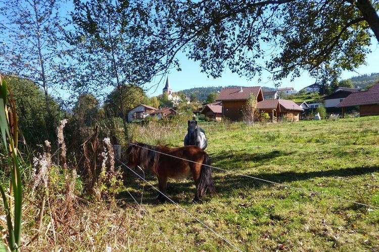 Chalet Frankrijk, Vogezen, Le Syndicat Chalet FR-88120-22