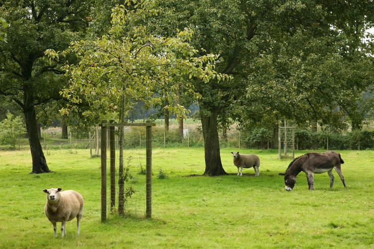 Boerderij België, West Vlaanderen, Beernem Boerderij BE-8730-10