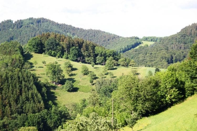Boerderij Duitsland, Baden-Wurttemberg, Mühlenbach-Windenbach Boerderij DE-77796-04