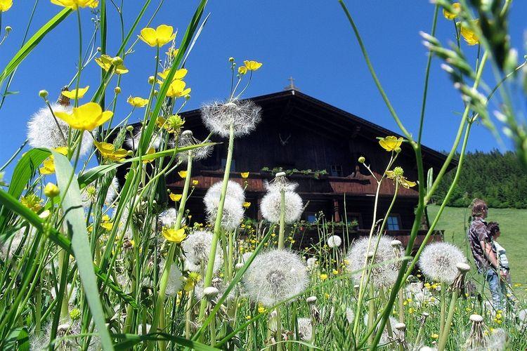 Ferienwohnung Berghuette (490224), Oberau (AT), Wildschönau, Tirol, Österreich, Bild 20
