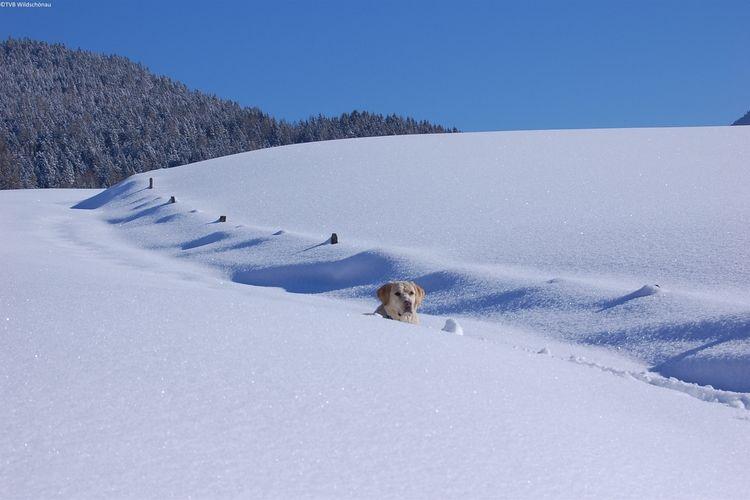 Ferienwohnung Berghuette (490224), Oberau (AT), Wildschönau, Tirol, Österreich, Bild 23