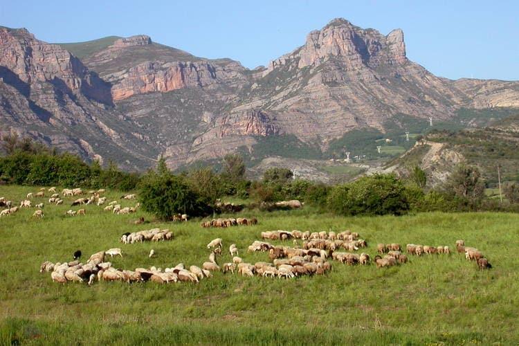 Maison de vacances Gepflegter Bungalow mit überdachter Terrasse in Aragon (873821), Isabena, Huesca, Aragon, Espagne, image 13