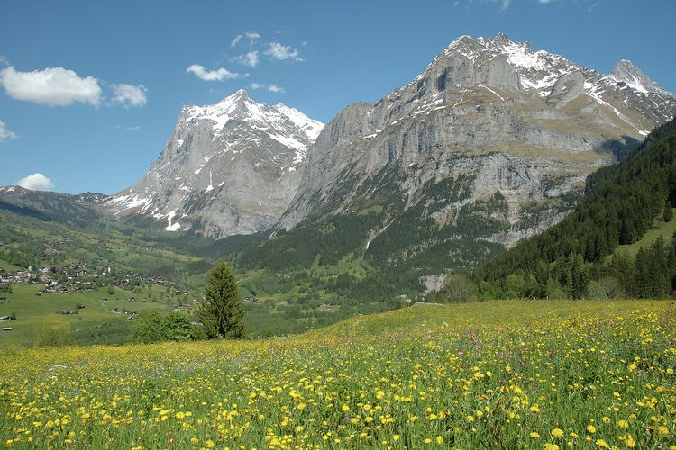 Alpha - Apartment - Grindelwald - Area - Summer