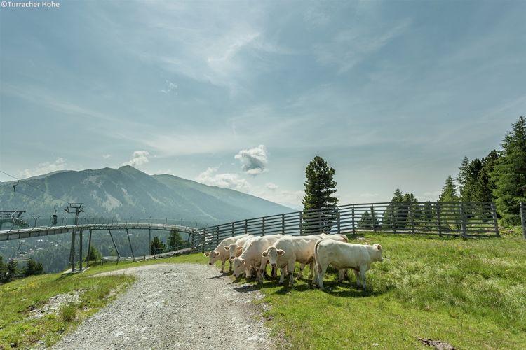Ferienwohnung Alpenresidenz Turrach (555390), Turrach, Murtal, Steiermark, Österreich, Bild 28