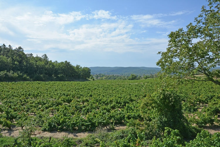 Ferienhaus Calme et vignes près de Montpellier (620480), Pignan, Mittelmeerküste Hérault, Languedoc-Roussillon, Frankreich, Bild 29