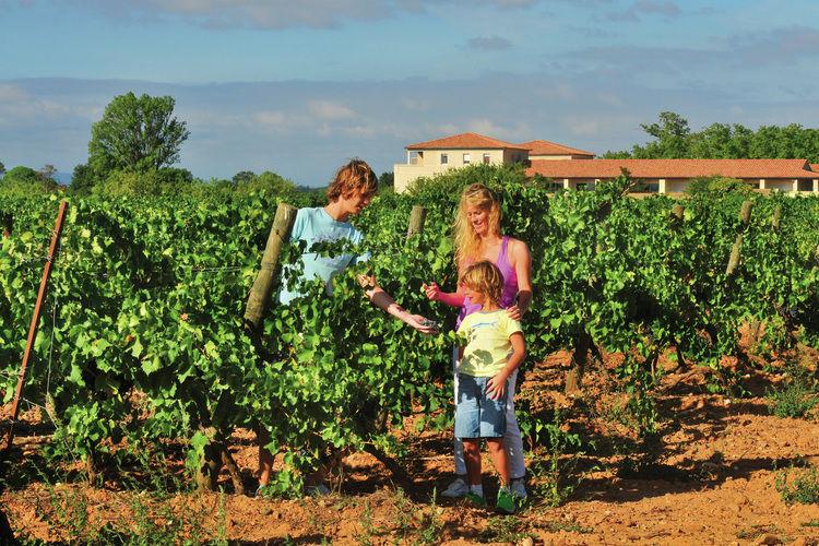 Ferienwohnung Le Chateau de Jouarres 1 (618529), Azille, Aude Binnenland, Languedoc-Roussillon, Frankreich, Bild 22