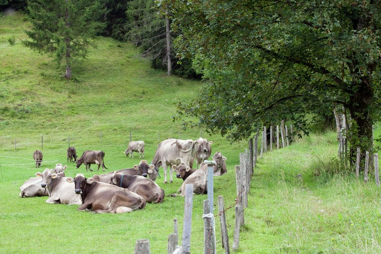 Holiday apartment Rothorn (657166), Waidring, Pillerseetal, Tyrol, Austria, picture 35